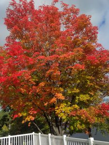 Fall colours 2016