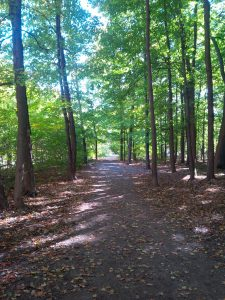 Urban trail in October